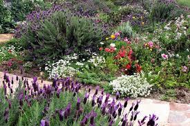 Jardín sostenible lavanda