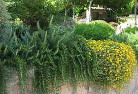 Jardín sostenible romero